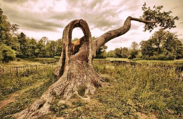 Дерево для записок влюбленных