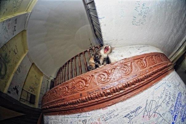 Экскурсия Мистика Петербурга