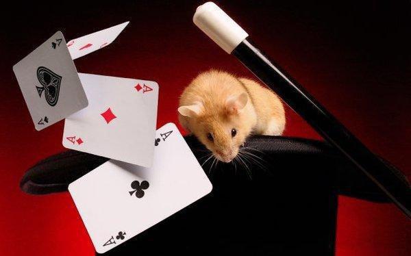 Шоу магии и фокусов Magic Table