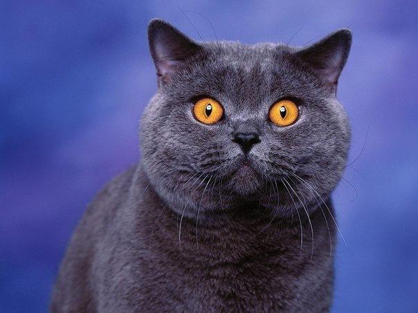 Пять мест для любителей кошек