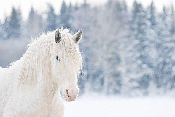 Конные клубы Петербурга : 10 лучших