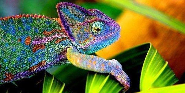 18 мест, где можно познакомиться с экзотическими животными