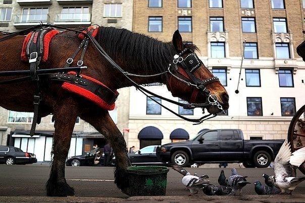 Где в Петербурге покататься на лошади