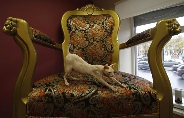 Самые кошачьи места Петербурга