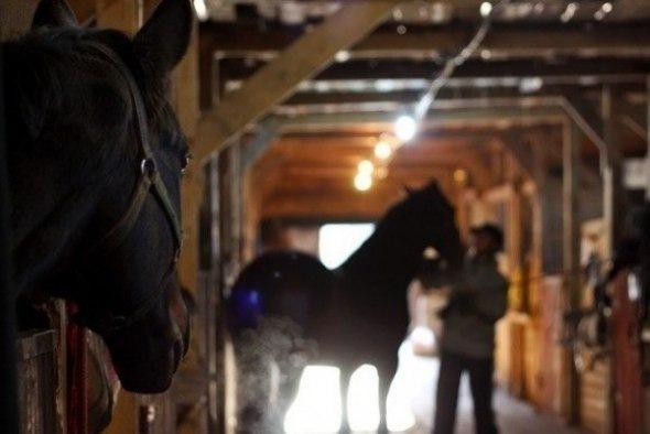 Самые крупные конные клубы Петербурга