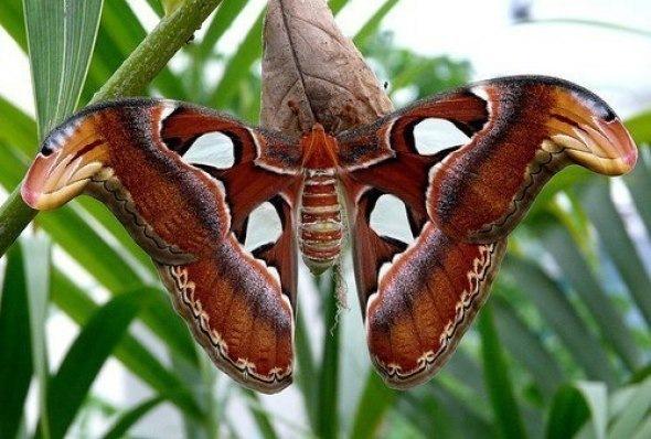 Выставки живых бабочек в Петербурге