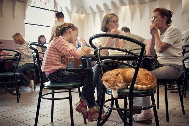 4 кафе Петербурга, в которых можно погладить кота