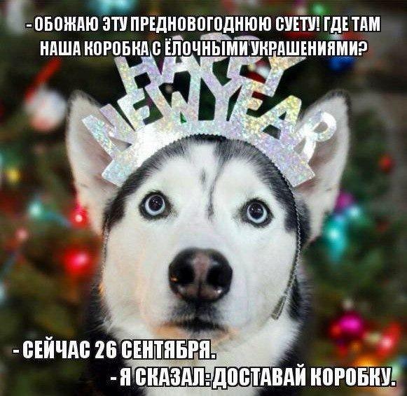 Как решить проблему с Новым годом за 1000 рублей?