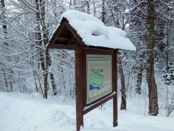Бесплатная весенняя экологическая экскурсия в сказочный лес!