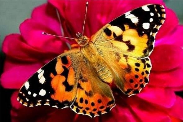 Посмотреть на живых бабочек в Петербурге