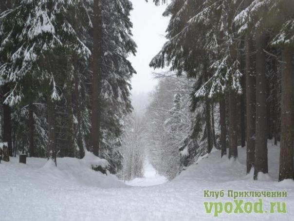 Празднование Нового года в Орехово