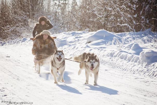 Катание на собачьих упряжках в подарок