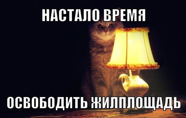 В Санкт-Петербурге подросток не вынес жизни с 60 кошками и покончил с собой