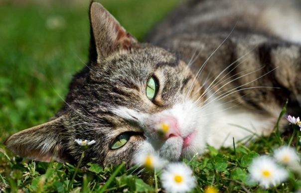 Эрмитаж раздает своих знаменитых котов