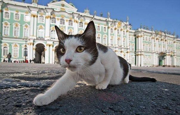 В США выпустили книгу про котов Эрмитажа