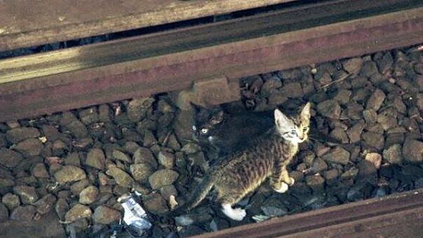 Котенок остановил движение поездов метро