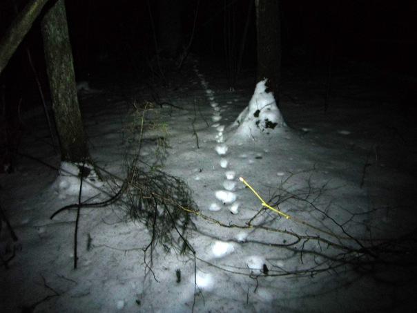 Молодой человек прожил в лесу три дня после ссоры с женой
