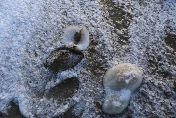 Берег Финского залива преобразился после новогоднего шторма