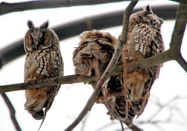 В Московском парке Победы поселились совы