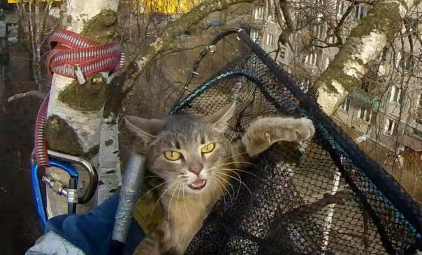 В Петербурге спасли кошку, просидевшую на дереве три дня
