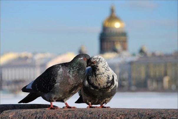 В Петербурге пройет Весенняя неделя добра
