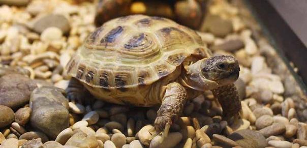 Из зоомагазина в Петербурге изъяли редких черепах