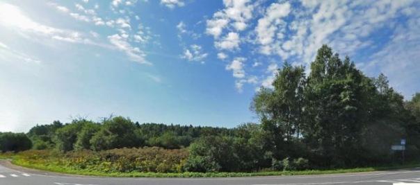 Почти 450 кустов конопли обнаружили на плантации в Ленобласти