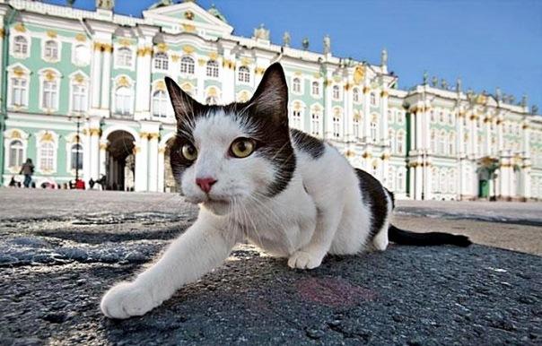 Изображения эрмитажных котов появятся на конфетах