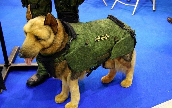 В Петербурге начали выпускать бронежилеты для служебных собак