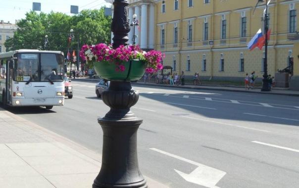 Улицы Петербурга летом украсят почти 8 млн цветов