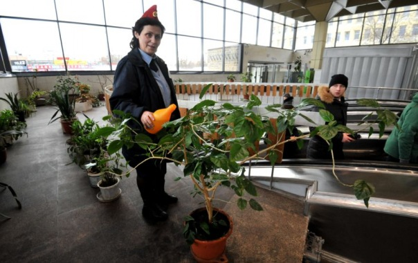 Оранжерея на станции метро Выборгская ждёт новых цветов