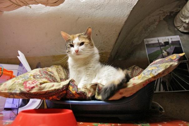 Коты Эрмитажа попали в рейтинг необычных достопримечательностей мира