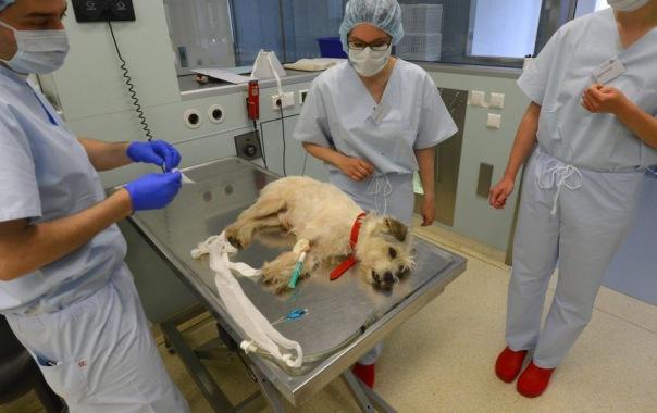 Ветеринар рассказала что делать, если собака проглотила отраву догхантеров