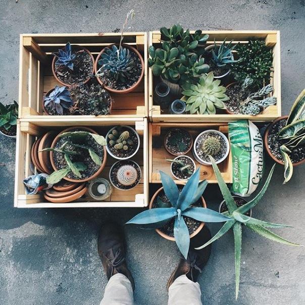 Весенний обмен растениями пройдет в центре города и старинном газгольдере