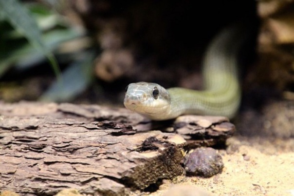 В Петербурге змея пробралась в квартиру по канализационным трубам