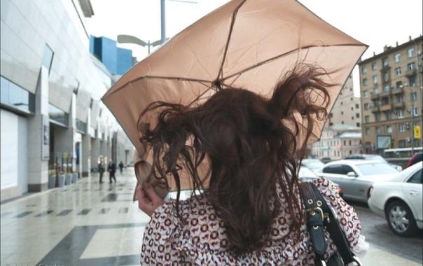 В Петербурге зацвела черёмуха: в городе ненадолго похолодает и пройдут дожди