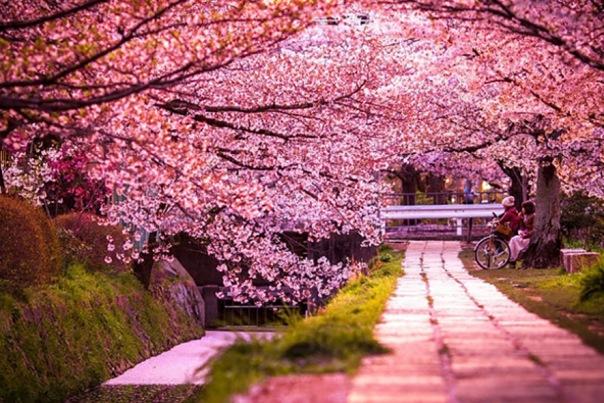 Фестиваль Японии пройдет в Петербурге