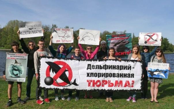 Зоозащитники проведут акцию за свободу дельфинов