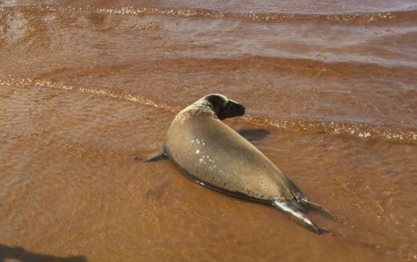В Финский залив выпустили на волю тюленей Шаляпина и Екатерингофочку