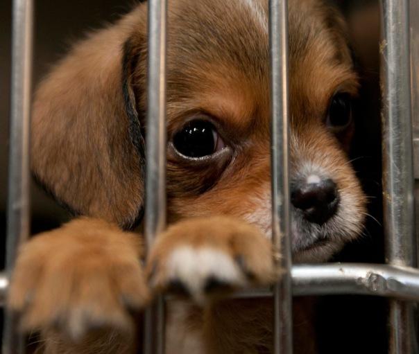 В Петербурге соберут корм для бездомных животных