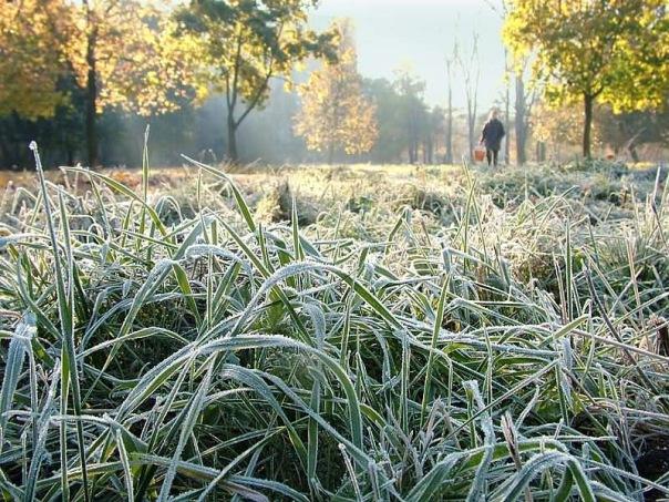 В Ленинградской области в ночь на 11 сентября ожидаются заморозки и туман