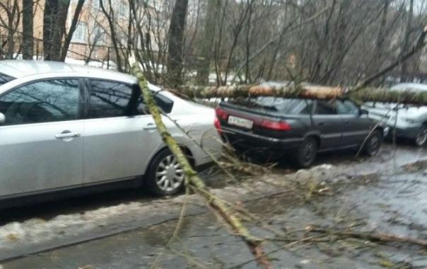 Очевидцы: упавшее на машину дерево перекрыло проезд к отделу полиции на улице Ленсовета