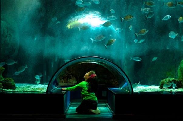 В Петербурге крупнейший океанариум появится через пять лет