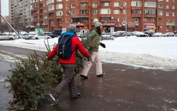 Новогодние ёлки петербуржцы могут сдать в пользу бездомных животных