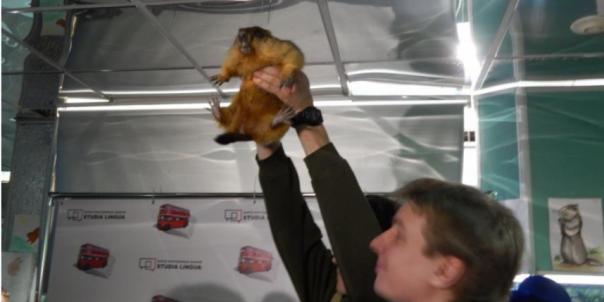 Ленинградский зоопарк не будет отмечать в этом году День сурка