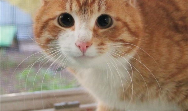 В Петербурге пройдут Все оттенки кошачьего
