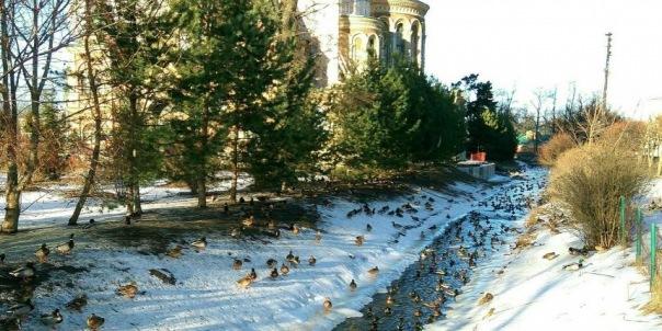 Канал в Петергофе захватили утки
