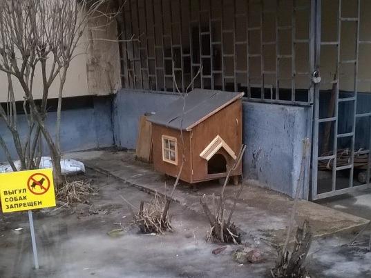 Во дворах Яхтенной улицы появились кошачьи дома