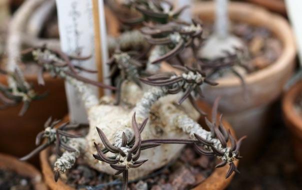 Редкие растения из закрытого фонда Ботанического сада покажут петербуржцам