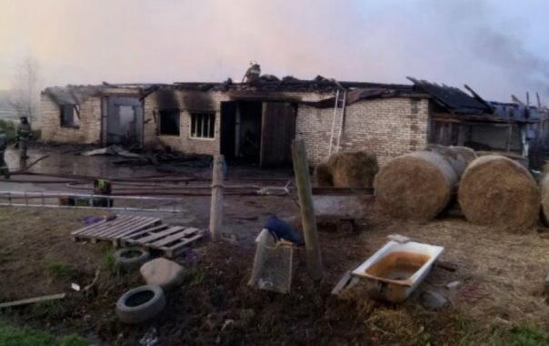При пожаре на конеферме под Гатчиной погибли 26 лошадей